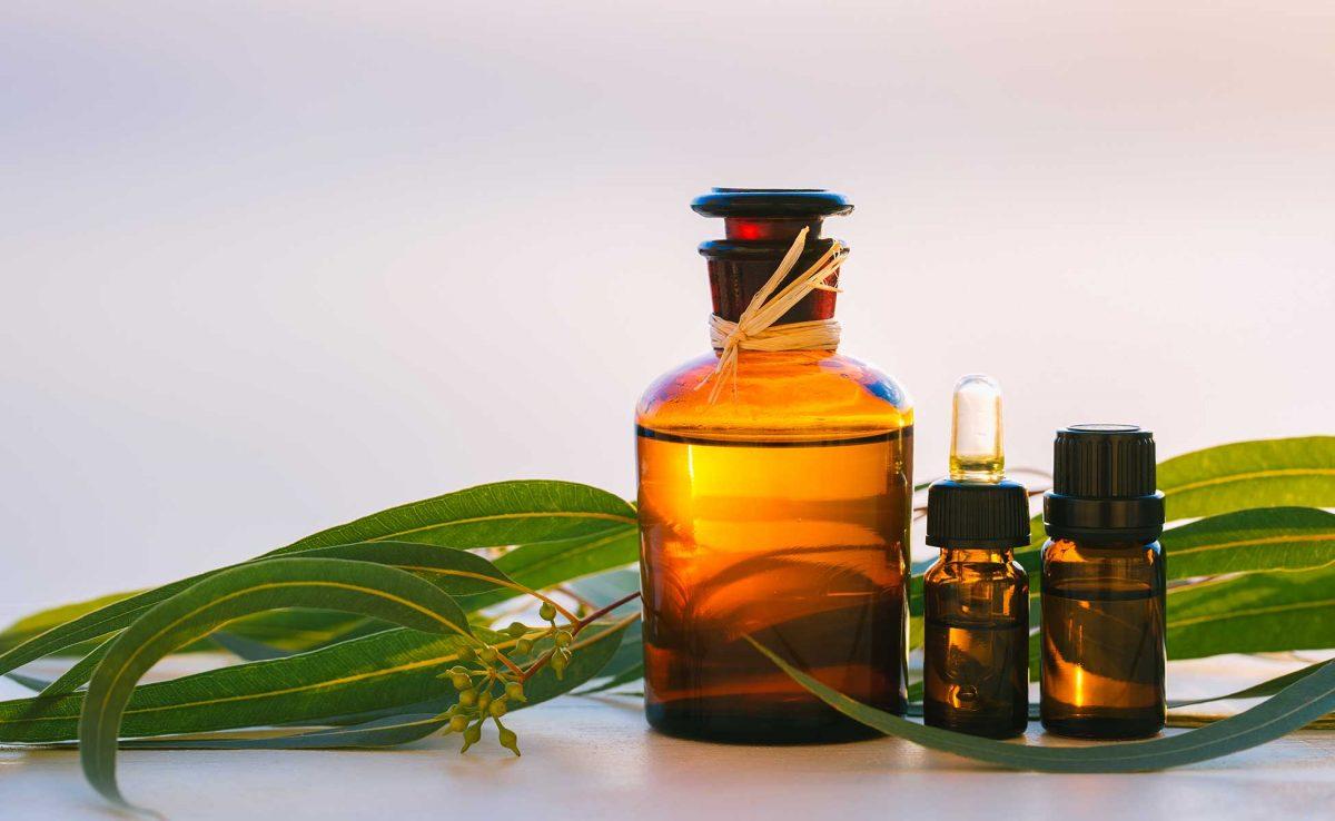 Eucalyptus globulus (Eucalyptus) Essential Oil