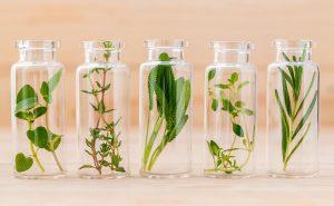 Aromatherapy - Nature's Medicine